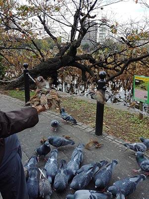 Habitué du parc nourrissant les oiseaux