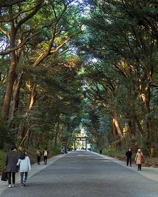 Forêt des 100 000 arbres
