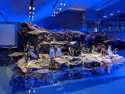 Espace des pingouins