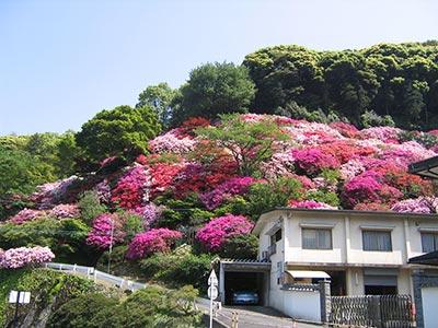 Jardin du Tatsumaki Jigoku